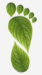 carbon_footprint_leaves
