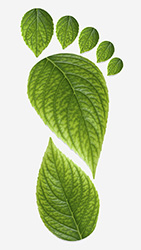 carbon_footprint_leaves